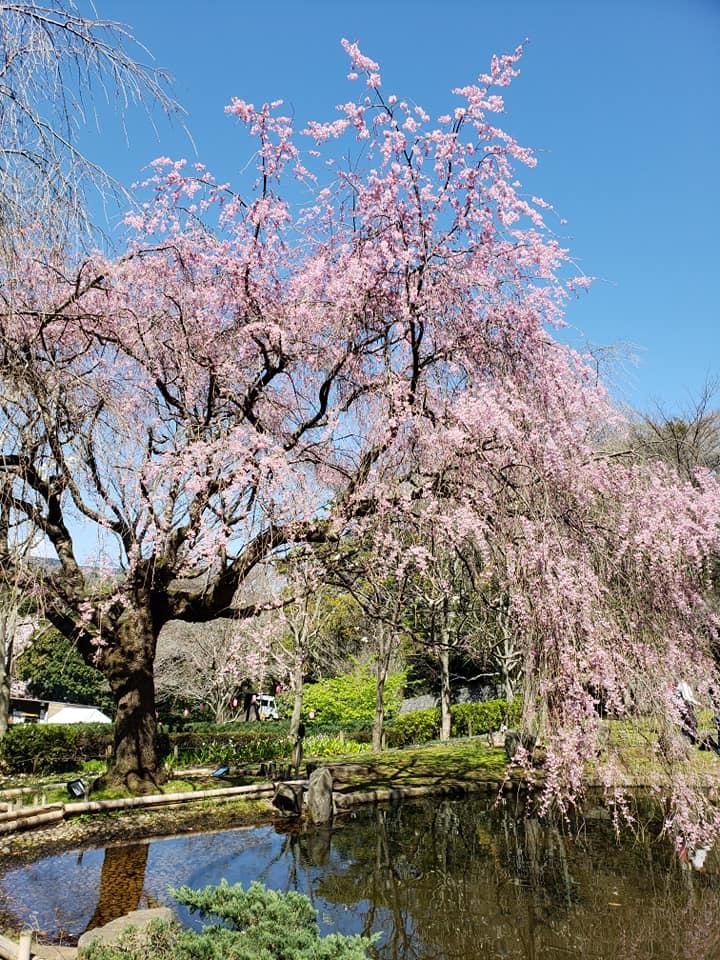 キャンピングカーで荒井城址公園に花見に行こう!